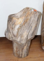 Petrified wood No. 5