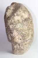 Petrified Coral, partly polished No. 11
