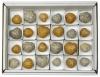 Box of Sea Urchin polished