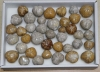 Box of Sea Urchin polished B-quality