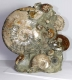 Ammonite Sculpture Ammo34