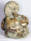 Ammonite Sculpture Ammo35