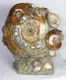 Ammonite Sculpture Ammo36
