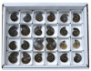 Box Ammonite Pairs, A-quality