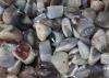 Botswana Agate Tumbled Stones, B-quality