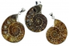 Ammonites with pin, Madagascar