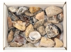 Box of Geodes (Occo's)