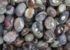 Botswana Agate Tumbled Stones