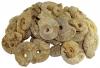 Ammonites (Perisphinctes) 2nd choice