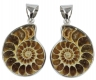 Pair of Ammonites with pin, Madagascar
