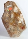 Petrified Coral, partly polished No. 14