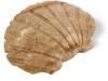 Shell 3 cm Steatit